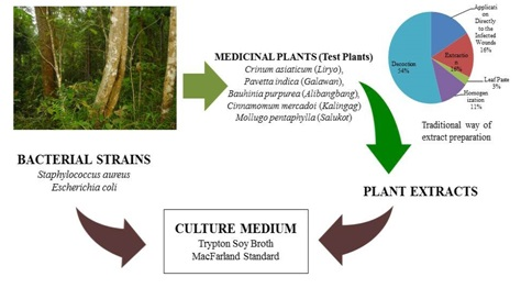 Antimicrobial test of five ethnomedicinal plants in an ancestral forest area
