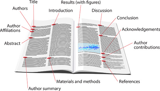 How People Read Scientific Papers